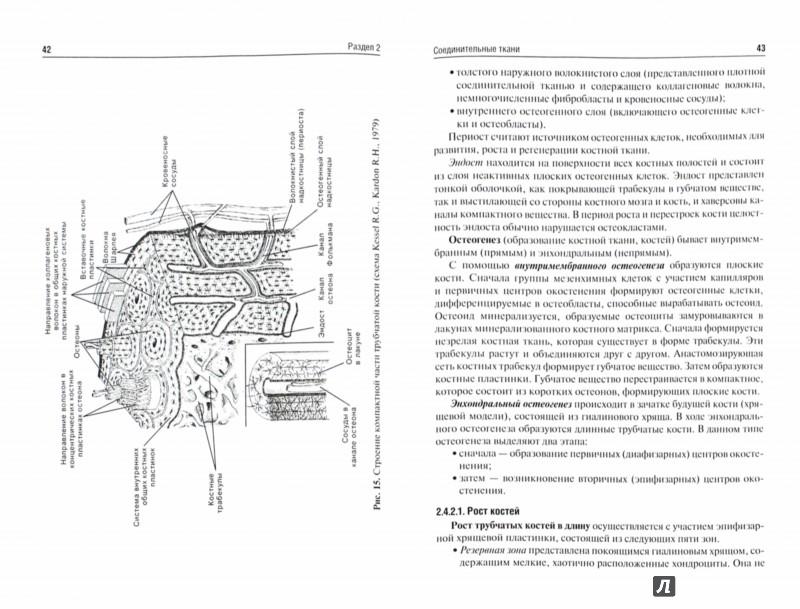 Иллюстрация 1 из 15 для Морфофизиология тканей. Учебное пособие - Давыдов, Самойлов, Лапкин | Лабиринт - книги. Источник: Лабиринт