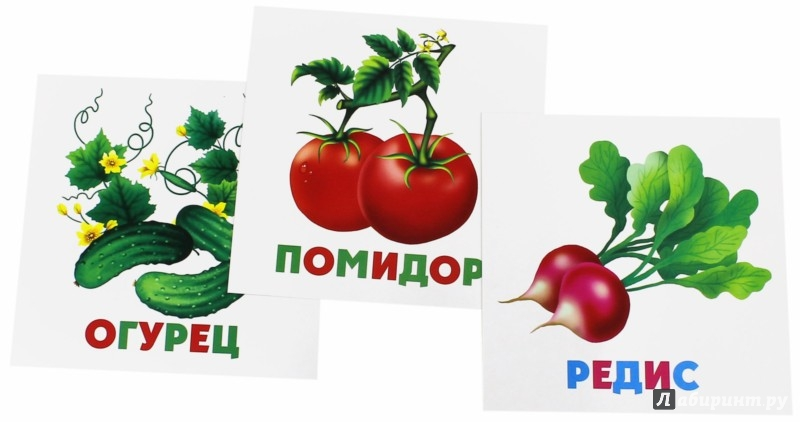 Иллюстрация 1 из 12 для Развивающие карточки Овощи (12 штук) (37271-50) | Лабиринт - книги. Источник: Лабиринт