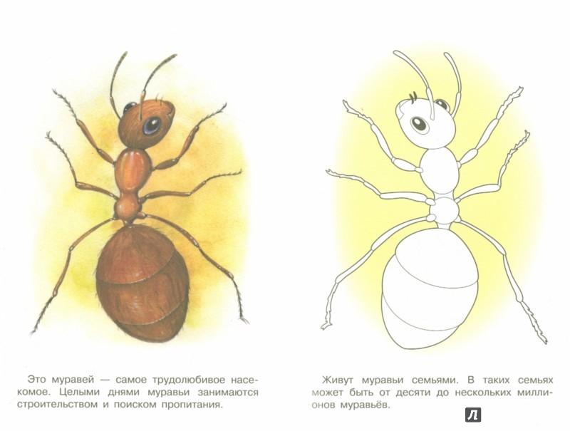 Иллюстрация 1 из 31 для Раскраска. Раскрашиваем и учимся. Насекомые | Лабиринт - книги. Источник: Лабиринт