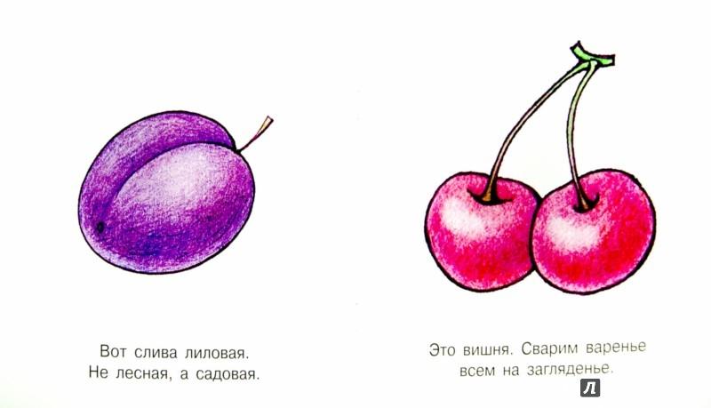 Иллюстрация 1 из 13 для Мои первые слова. Фрукты. Для детей от 1 года | Лабиринт - книги. Источник: Лабиринт