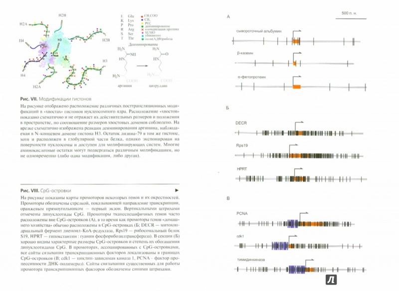 Иллюстрация 1 из 19 для Хроматин. Упакованный геном - Разин, Быстрицкий | Лабиринт - книги. Источник: Лабиринт