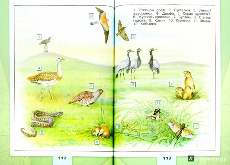 Иллюстрация 1 из 39 для Окружающий мир. 4 класс. Учебник. В 2-х частях. Часть 1. ФГОС - Плешаков, Крючкова | Лабиринт - книги. Источник: Лабиринт