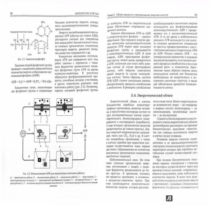 Иллюстрация 1 из 16 для Биология клетки. Учебное пособие - Адоева, Захаркив, Никитин | Лабиринт - книги. Источник: Лабиринт