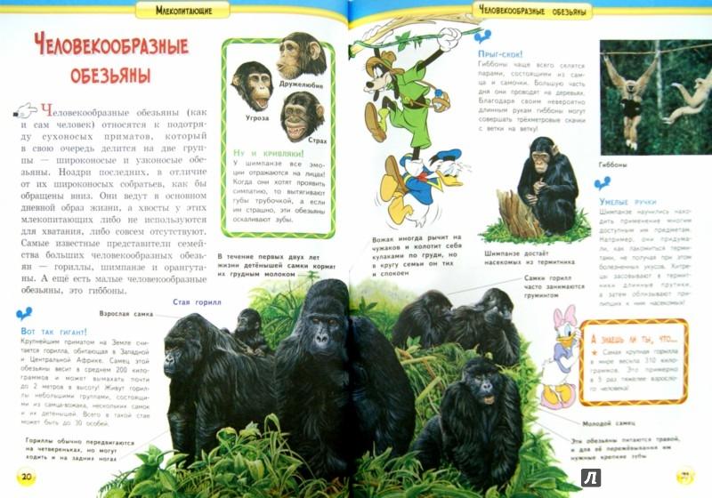 Иллюстрация 1 из 25 для Млекопитающие | Лабиринт - книги. Источник: Лабиринт