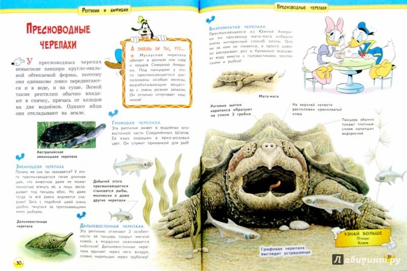 Иллюстрация 1 из 13 для Рептилии и амфибии   Лабиринт - книги. Источник: Лабиринт