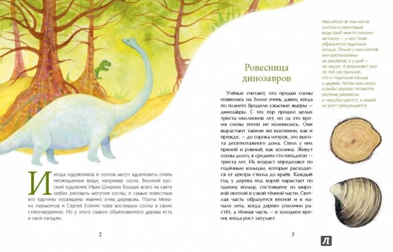 Иллюстрация 1 из 17 для Сосна. Про мачты, янтарь и сосновые яблоки - Елена Максимова | Лабиринт - книги. Источник: Лабиринт