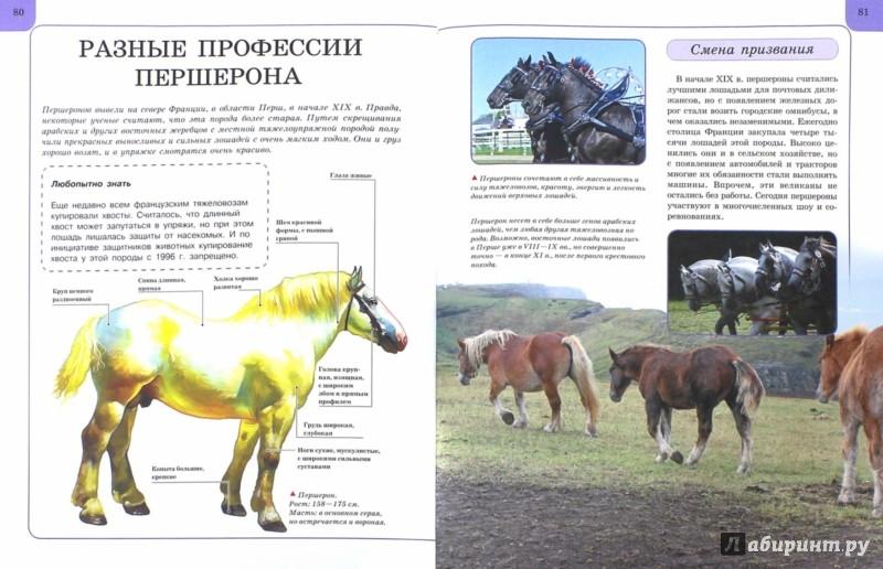 Иллюстрация 1 из 7 для Лошади и пони - Анна Ламбина | Лабиринт - книги. Источник: Лабиринт