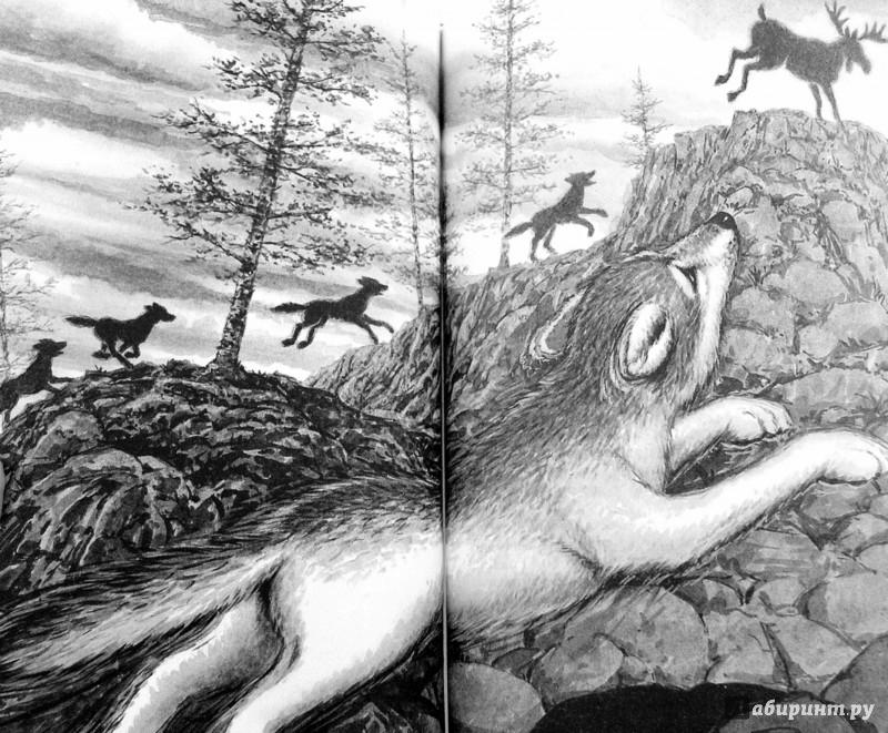 Иллюстрация 1 из 6 для Волки из страны Далеко-Далеко. Одиночка. Тень - Кэтрин Ласки | Лабиринт - книги. Источник: Лабиринт