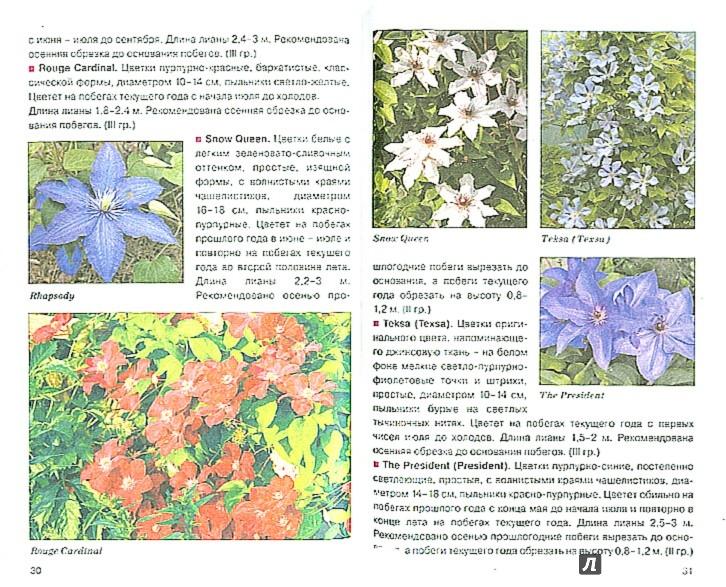 Иллюстрация 1 из 14 для Клематисы - Валерия Ильина | Лабиринт - книги. Источник: Лабиринт