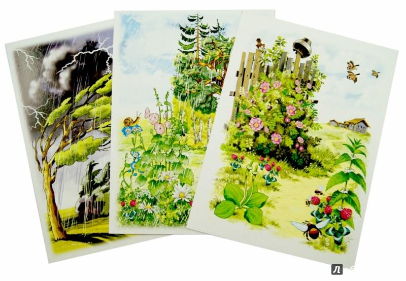 Иллюстрация 1 из 26 для Лето. Комплект карточек - Вера Шипунова | Лабиринт - книги. Источник: Лабиринт
