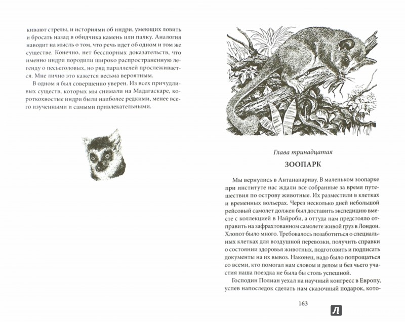 Иллюстрация 1 из 26 для К югу от экватора. Мадагаскарские диковины. Под тропиком Козерога - Дэвид Аттенборо | Лабиринт - книги. Источник: Лабиринт