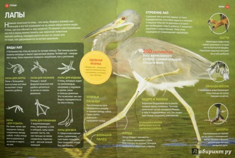 Иллюстрация 1 из 20 для Млекопитающие и Птицы | Лабиринт - книги. Источник: Лабиринт