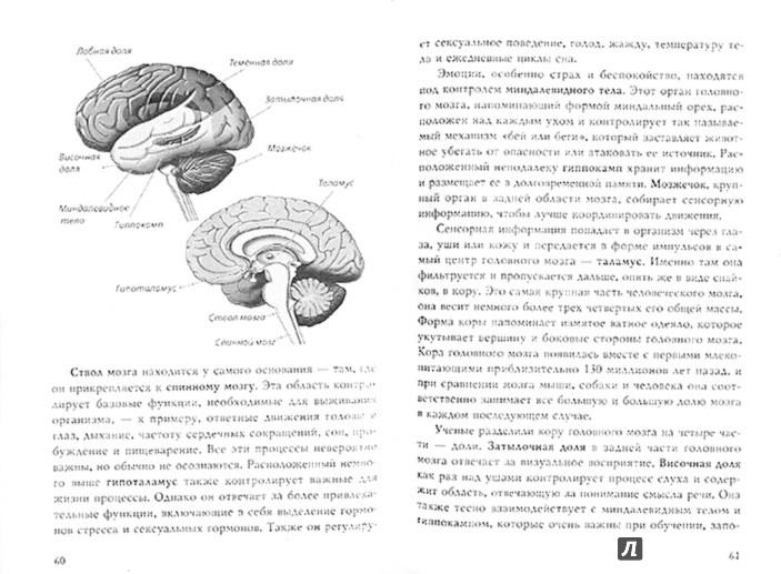 Иллюстрация 1 из 7 для Тайны нашего мозга, или Почему умные люди делают глупости - Амодт, Вонг | Лабиринт - книги. Источник: Лабиринт