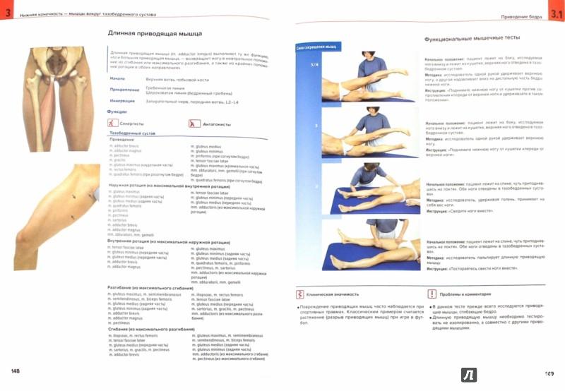 Иллюстрация 1 из 35 для Мышцы. Анатомия. Движения. Тестирование - Валериус, Франк, Колстер | Лабиринт - книги. Источник: Лабиринт