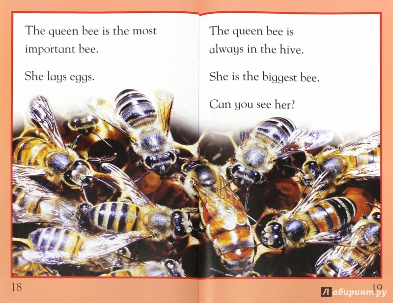Иллюстрация 1 из 7 для Mac Fact Read.  Busy as a Bee - Louise Caroll | Лабиринт - книги. Источник: Лабиринт