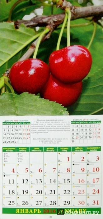 Иллюстрация 1 из 13 для Календарь на 2016.Лунный календарь садовода и огородника (45604) | Лабиринт - сувениры. Источник: Лабиринт