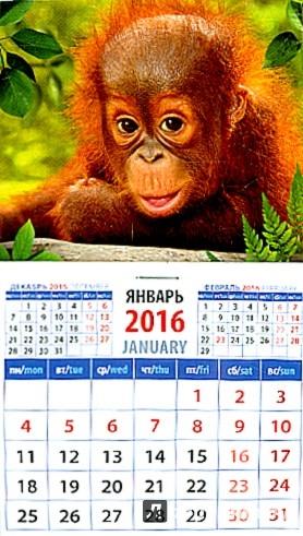 Иллюстрация 1 из 3 для Календарь на магните на 2016 год. Год обезьяны. Малыш орангутанг (20627) | Лабиринт - сувениры. Источник: Лабиринт
