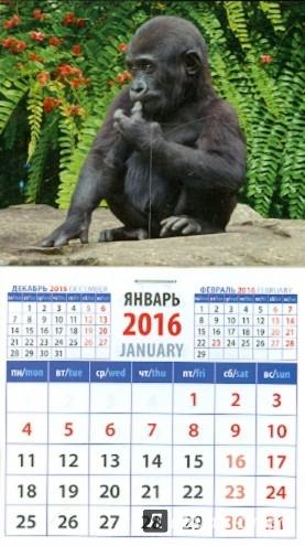 Иллюстрация 1 из 2 для Календарь на магните 2016. Год обезьяны. Детеныш гориллы (20632) | Лабиринт - сувениры. Источник: Лабиринт