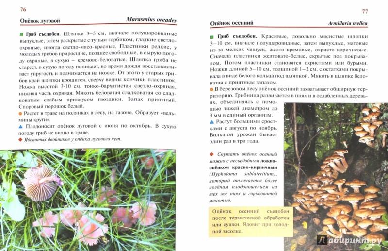 Иллюстрация 1 из 25 для Грибы Европейской части России - Федор Карпов | Лабиринт - книги. Источник: Лабиринт
