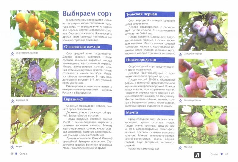 читать шпаргалка для садоводов