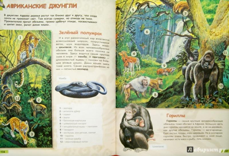 Иллюстрация 1 из 15 для Моя первая детская энциклопедия - Кургузов, Ордынская, Сендерова, Собе-Панек | Лабиринт - книги. Источник: Лабиринт