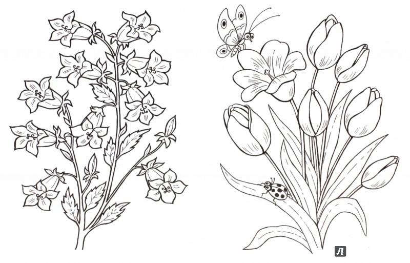 Иллюстрация 1 из 18 для Цветы и бабочки - Т. Коваль | Лабиринт - книги. Источник: Лабиринт
