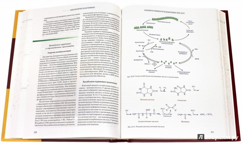 Иллюстрация 1 из 11 для Биологическая химия. Учебник - Олецкий, Кухта, Морозкина | Лабиринт - книги. Источник: Лабиринт