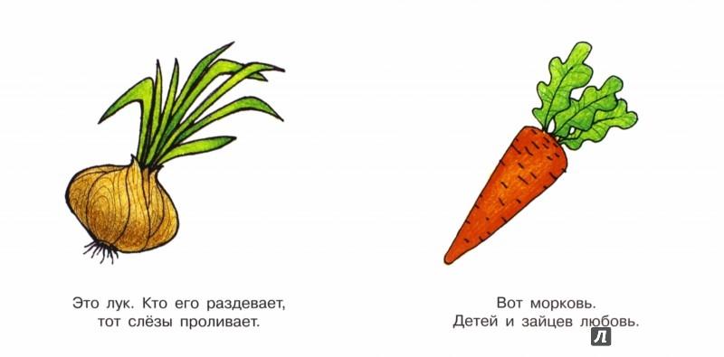 Иллюстрация 1 из 16 для Овощи. Для детей от 1-го года | Лабиринт - книги. Источник: Лабиринт