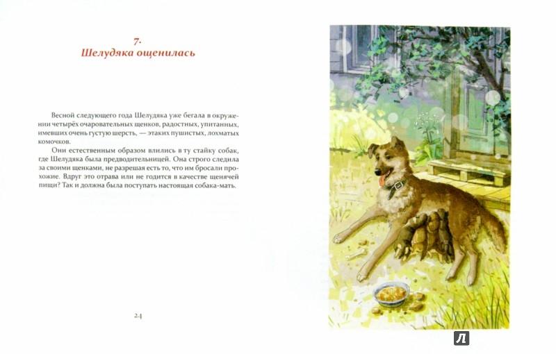 Иллюстрация 1 из 22 для Шелудяка - Евгений Колкотин | Лабиринт - книги. Источник: Лабиринт