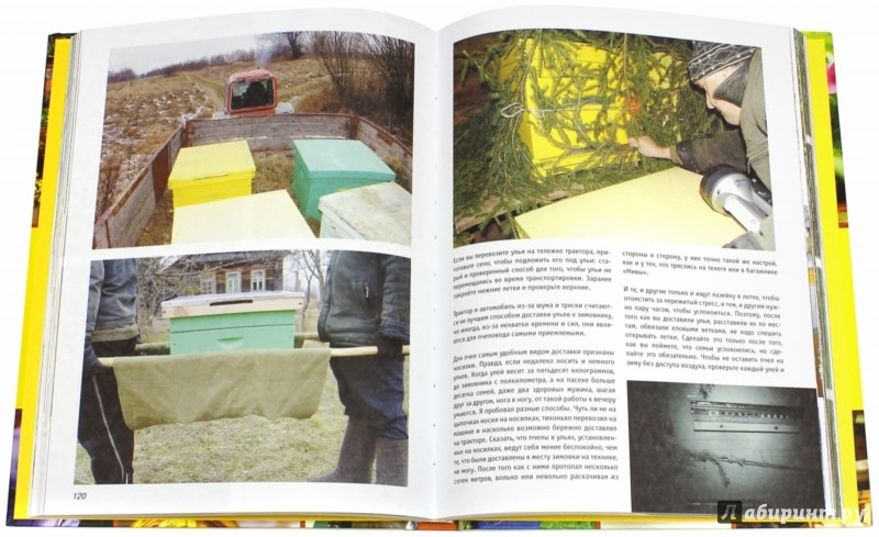 Иллюстрация 1 из 6 для Библия пчеловода - Вадим Тихомиров | Лабиринт - книги. Источник: Лабиринт