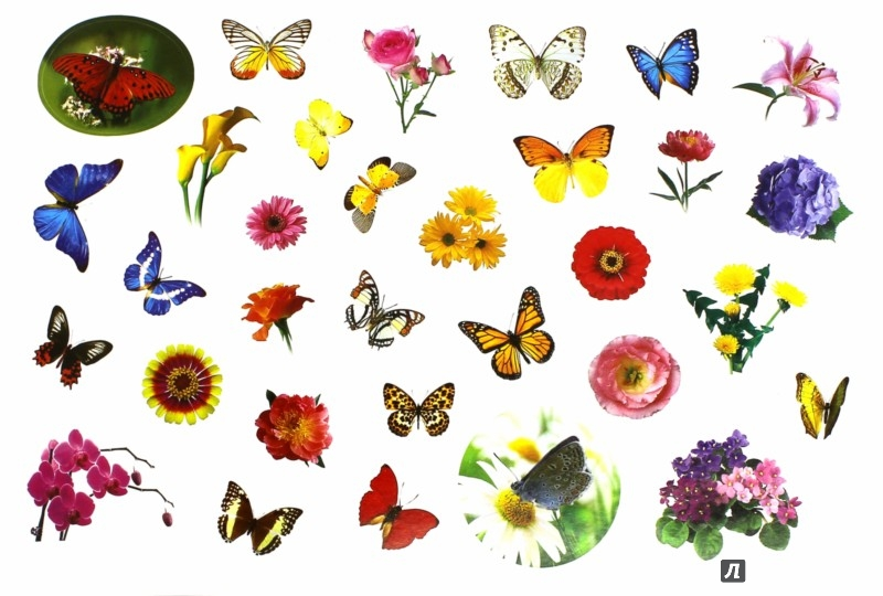 Иллюстрация 1 из 20 для 400 наклеек. Мир цветов и бабочек | Лабиринт - книги. Источник: Лабиринт