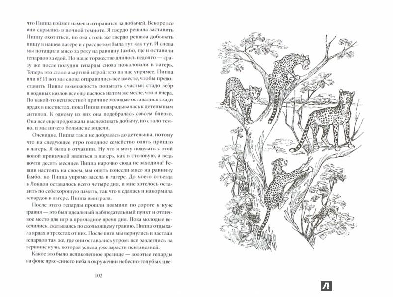 Иллюстрация 1 из 21 для Пиппа бросает вызов - Джой Адамсон | Лабиринт - книги. Источник: Лабиринт