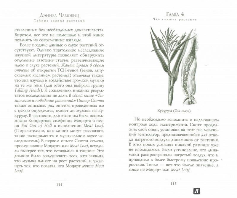Иллюстрация 1 из 26 для Тайные знания растений. Что видят, слышат и помнят цветы и деревья - Дэниел Чамовиц | Лабиринт - книги. Источник: Лабиринт