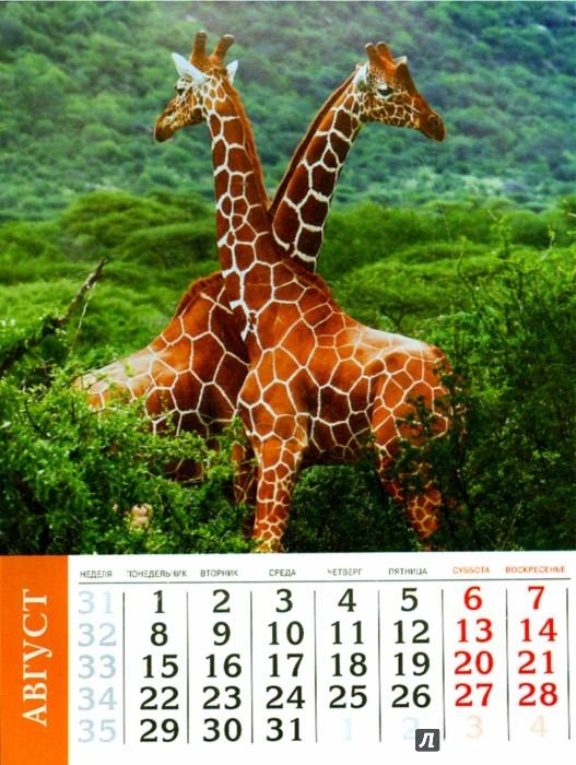 Иллюстрация 1 из 13 для Календарь 2016 год. ЖИВОТНЫЕ (на магните) (39591-36) | Лабиринт - сувениры. Источник: Лабиринт