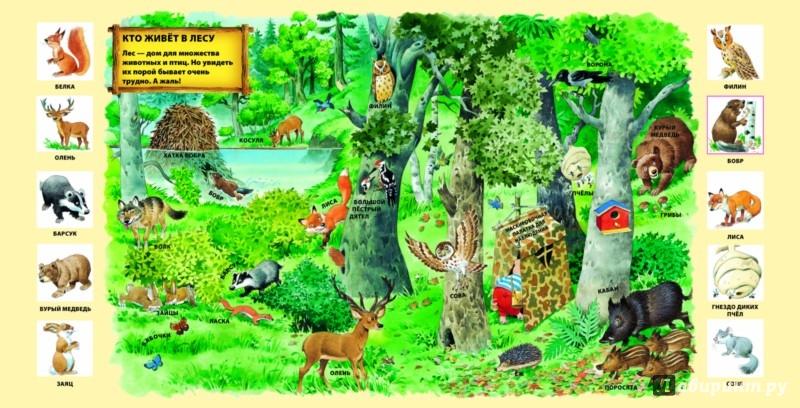 Иллюстрация 1 из 32 для В лесу | Лабиринт - книги. Источник: Лабиринт