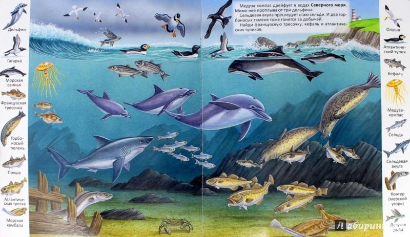 Иллюстрация 1 из 10 для Животные и растения морей и океанов | Лабиринт - книги. Источник: Лабиринт