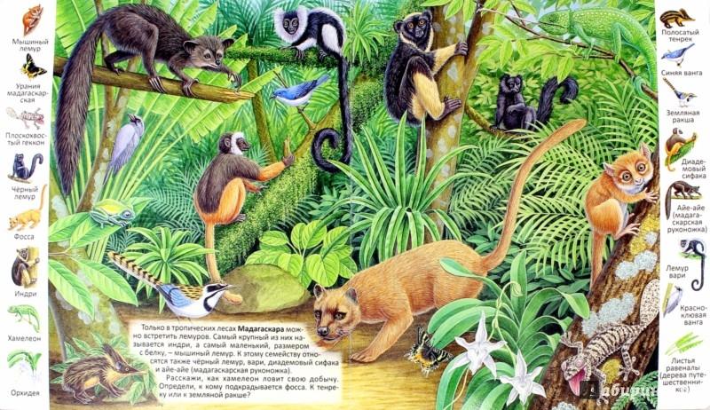 Иллюстрация 1 из 30 для Животные и растения тропических лесов | Лабиринт - книги. Источник: Лабиринт