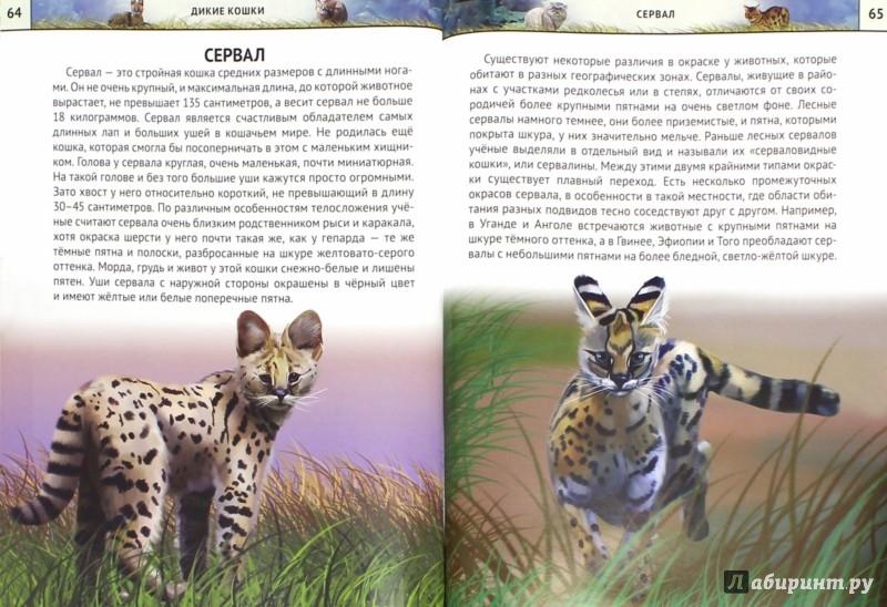 Иллюстрация 1 из 24 для Дикие кошки - Михаил Савостин | Лабиринт - книги. Источник: Лабиринт