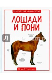 Лошади и пони махаон моя большая книга о лошадях и пони