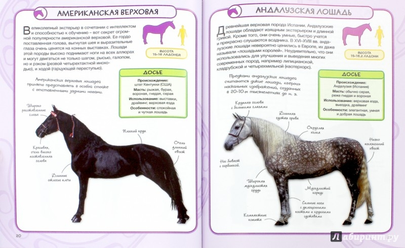 Иллюстрация 1 из 23 для Лошади и пони - Бедуайер Камилла де ла | Лабиринт - книги. Источник: Лабиринт