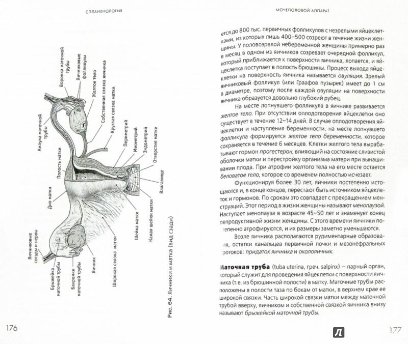 Иллюстрация 1 из 6 для Анатомия человека. Краткий курс - Козлов, Гурова | Лабиринт - книги. Источник: Лабиринт
