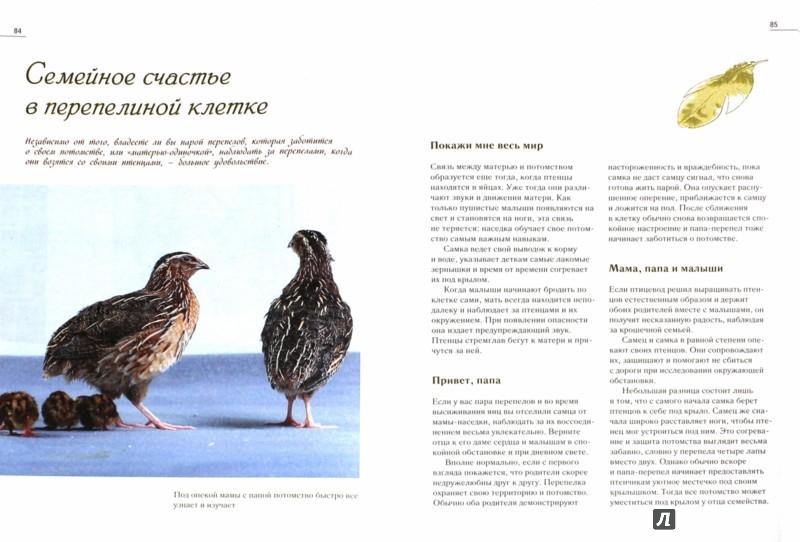 Иллюстрация 1 из 4 для Перепела. Полная технология разведения и выращивания - Энн-Кэтрин Гомрингер | Лабиринт - книги. Источник: Лабиринт
