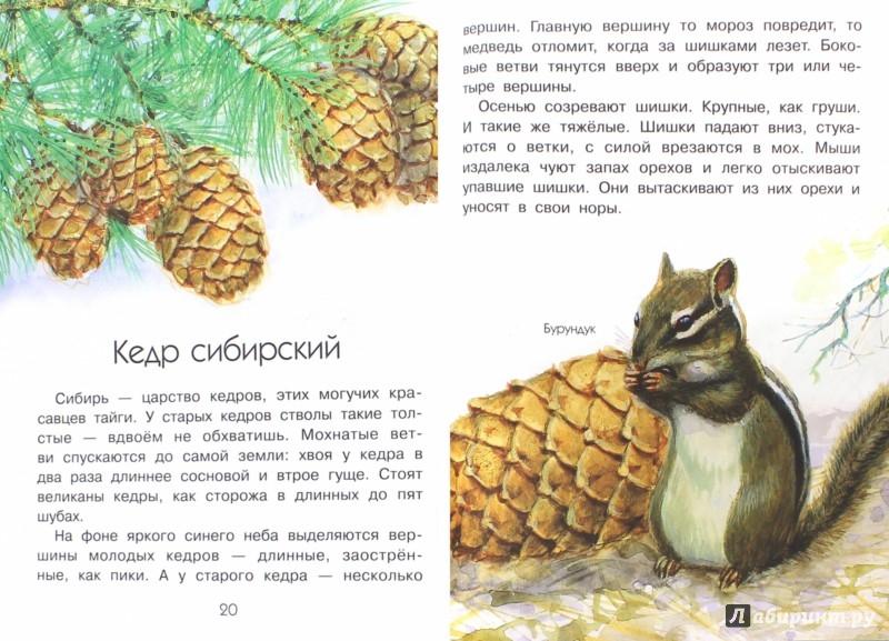 Иллюстрация 1 из 27 для Зачем ёлке иголки? - Алексей Смирнов | Лабиринт - книги. Источник: Лабиринт