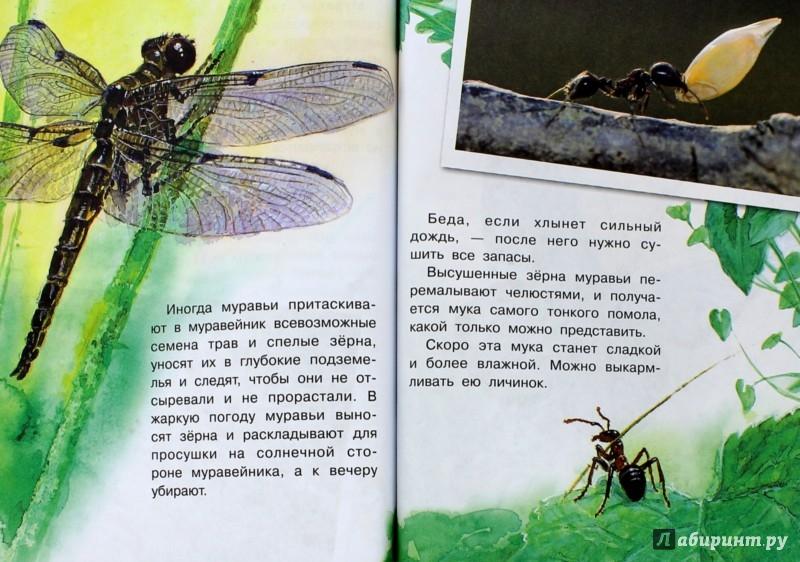 Иллюстрация 1 из 33 для Кто в муравейнике живет? - Александр Тамбиев | Лабиринт - книги. Источник: Лабиринт