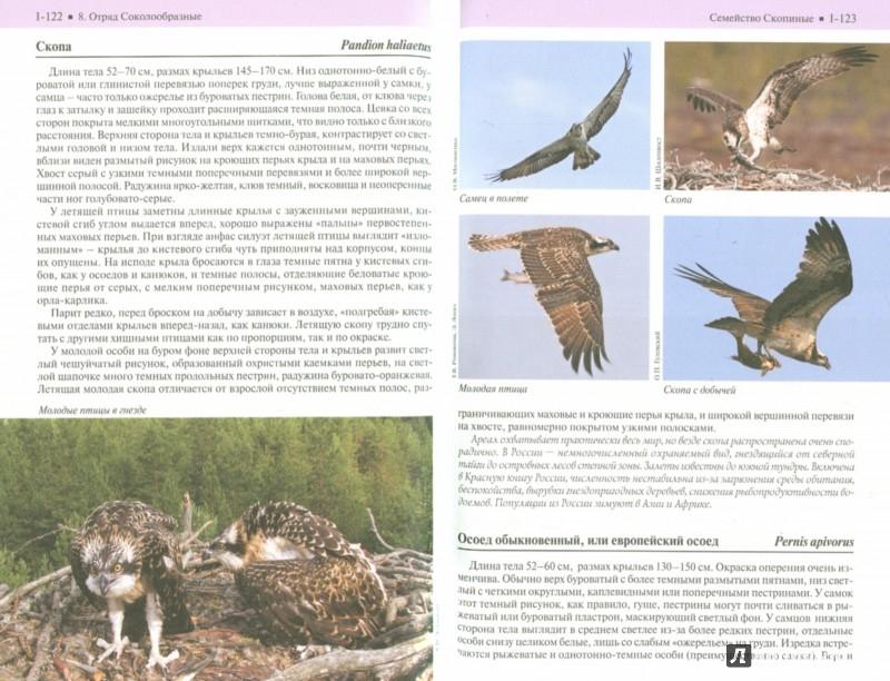 Иллюстрация 1 из 4 для Полевой фотоопределитель птиц европейской части России. В 3-х книгах - Калякин, Коблик, Редькин | Лабиринт - книги. Источник: Лабиринт
