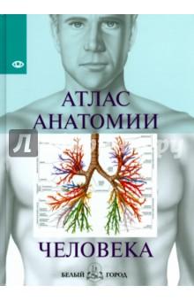 Атлас анатомии человека анна спектор большой иллюстрированный атлас анатомии человека