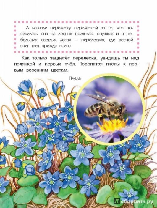 Книга Что растёт на лесной поляне  скачать бесплатно в