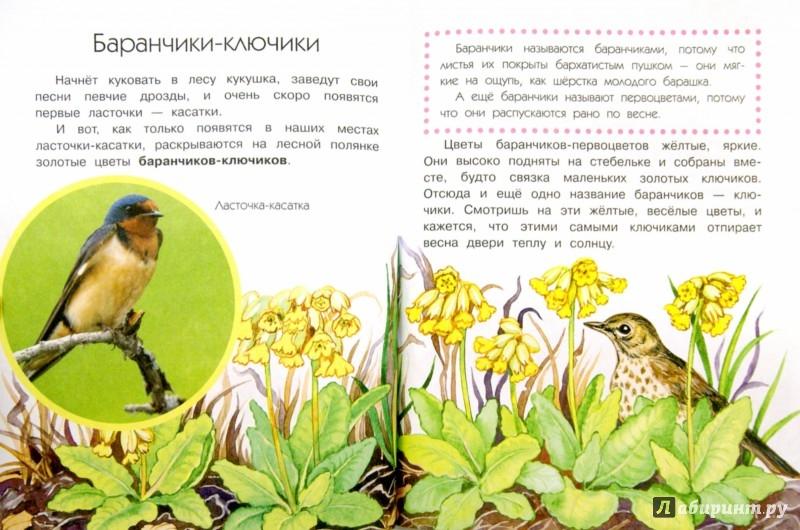 Книга quotЧто растёт на лесной полянеquot  Анатолий Онегов