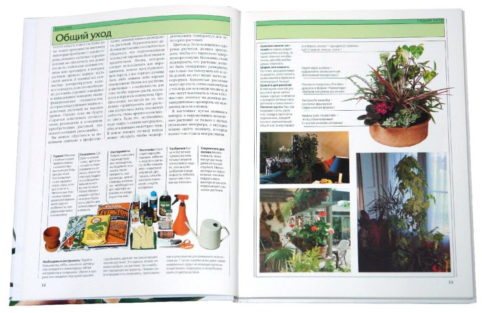 Иллюстрация 1 из 2 для Экзотические комнатные растения. Орхидеи, кактусы и другие суккуленты - Дэвидсон, Бильтон, Клайв | Лабиринт - книги. Источник: Лабиринт