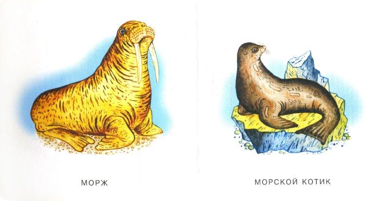 Иллюстрация 1 из 3 для Морские животные   Лабиринт - книги. Источник: Лабиринт
